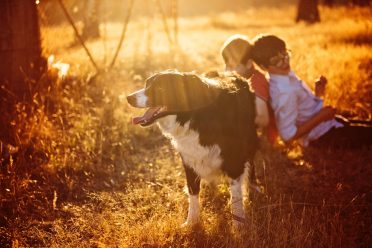 A sunset photo of a Border Collie guarding two kids