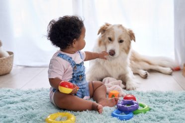 A Border Collie Lab mix playing with a baby