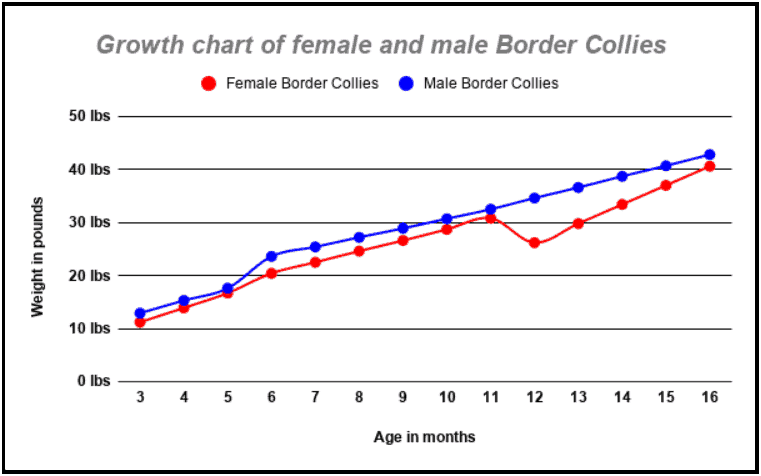 a line graph showing the growth of male and female Border Collies
