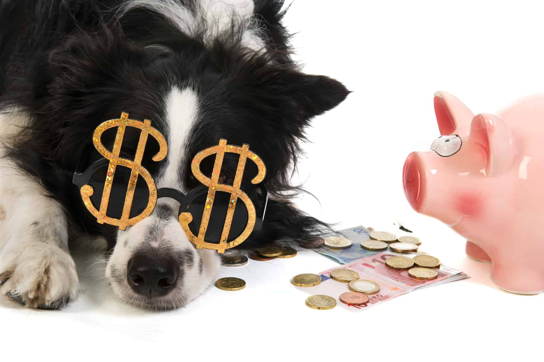 A Border Collie wearing dollar sign glasses while laying beside money and a piggy bank