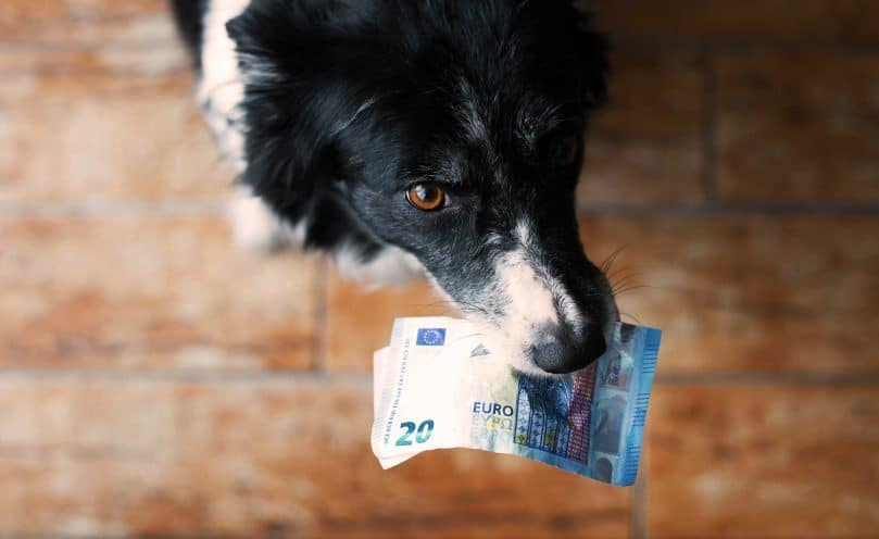 Black and white Border Collie holding money
